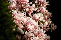 voller Blüten