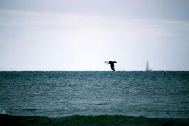 Möwe vor Boot