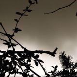 dunkler horizont